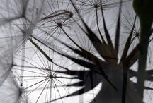 dandelion and architeture