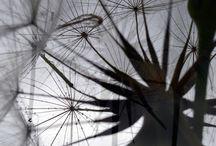 dandelion and architeture