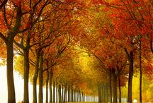 Ağaçlar / Ağaçlar