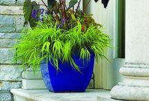 Gardens: Pots & Baskets