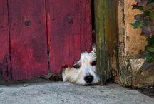 psie oči hovoria ...