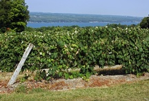 Finger Lakes / There's so much to see and do in New York State and we've got 11 tourism regions to help you keep track.   The Finger Lakes Region: featuring 11 pristine lakes, ideal for fishing, swimming, boating. The legendary Finger Lakes wine trails showcase some of the nation's premier wineries. Complementing this natural beauty are cities and towns filled with cultural treasures.  Plan your next Finger Lakes getaway at www.iloveny.com