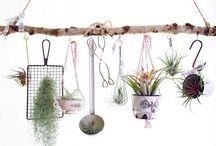 Deko Pflanzen