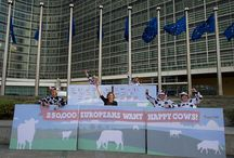 Supporting Better Dairy Petition Hand-in / At the end of October 2013, with the Supporting Better Dairy Coalition, we delivered over 250,000 signatures to the European Commission in support of improved dairy cow welfare. Check out our photos from the meeting, and the Ben & Jerry's ice-cream hand-out outdoors.