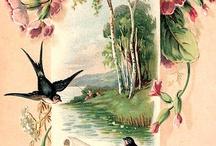 Kuş transfer resimleri
