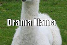 LlamaAlpaca