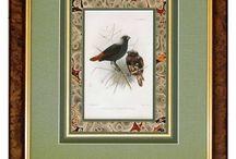 oiseaux encadres