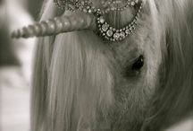 Unicorn ✨