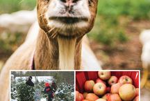 Agritourism in New Hampshire / Things to do on farms and related to agriculture and rural life in New Hampshire