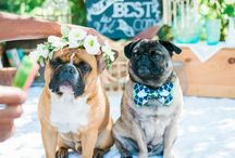 Your Pets In Your Wedding / Nothing gets me more than seeing a dog (or any pet) in a wedding! So sweet! Here's my ode to the couple that loves their pet so much that they were celebrated on the couple's big day! <3
