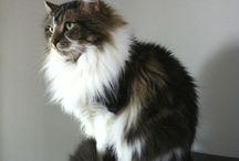 Beamer / Beamer the cat