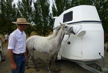 Horse fun / Clinics