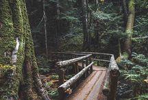 Sweet Nature