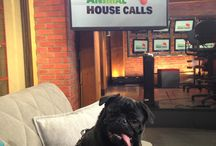 Animal House Calls / On the set of CP24's Animal House Calls with Dr. Alex German and hosted by Ann Rohmer.