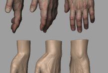 Anatomy hands