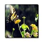 Butterflies / by WhiteOak Thomas