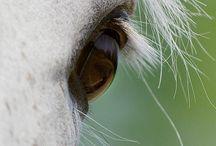Horses, Horses, Horses