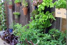 Small Spaces Gardening