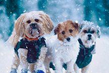 Animal Lover / Biribirnden tatlı ve sevimli dostlar sizinle