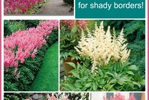 K.Shade Garden ideas.