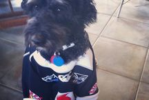 Warriors Pets / Even pets can be Vodafone Warriors supporters! Sometimes they like to represent.
