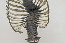 _Photo Anatomy - Hurman Bones Skull