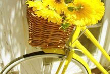 Bikes And Flowers / by Mary Ann Johnson