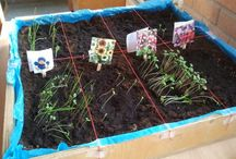Lente - groeien/bloeien
