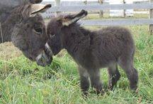 Farm animals donkeys / by Callie Watson