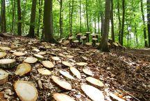 "Varázserdő 1. – Fa –, ""Magic Forest"", Tree"