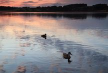 Our Special Guests / Ducks at Wineport
