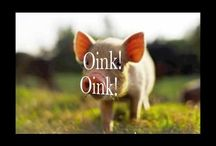 on the farm / by Shannon Oatsvall Konz