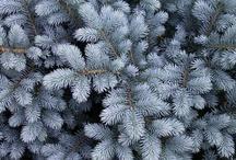 G-Garden--Spruce / by Joanna Kressaty
