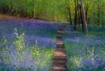 Paul Evans / Stunning Landscape Artist
