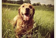 Melachi -Mika's dog