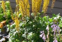 pacific.northwest.yard&garden / great ideas for your Pacific Northwest yard and garden!