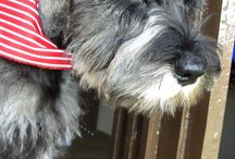 Kassi / Our pets! / by Dianne Bailey