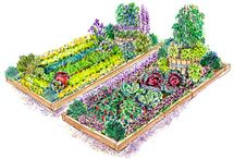 Gardening / by Candise Nolan-Fine