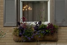 Out of the Box Windowboxes