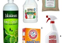 Earth Friendly Living / Living naturally - cleaners to food.