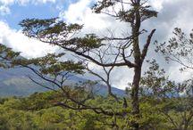 Chile / wunderschöne Natur u Tierwelt