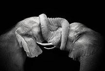Anything unrelated to elephant is irrelephant
