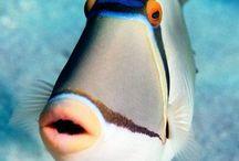 Creature dell'oceano (Ocean Creatures)