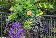 JARDINS / FLEURS, PLANTES, JARDINS