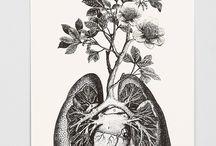 Lung heart