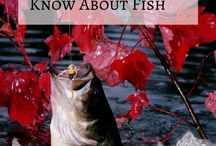Fishing Tips / This board is all about fishing tips. Share your fishing tips here..