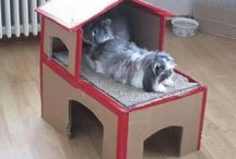 Nyuszi ház