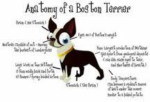 Boston Terrier love / by Amanda Daubner