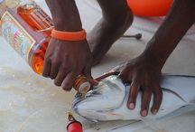 Rum & Fishing