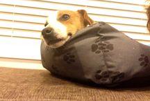 Patch pup